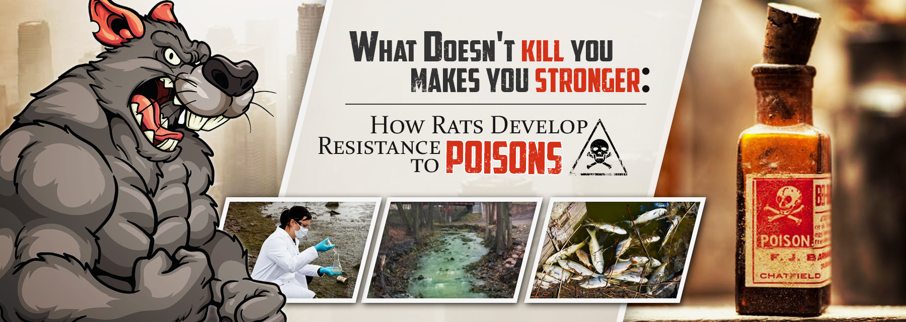 Collateral Damage Rat Poison Kills More Than Rats The