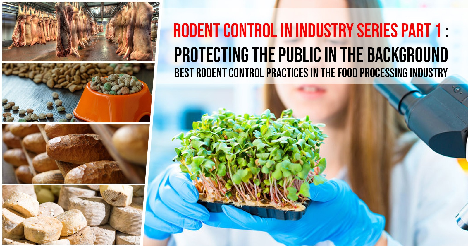 Rodent Control in Industry Series Part 1: Protecting the