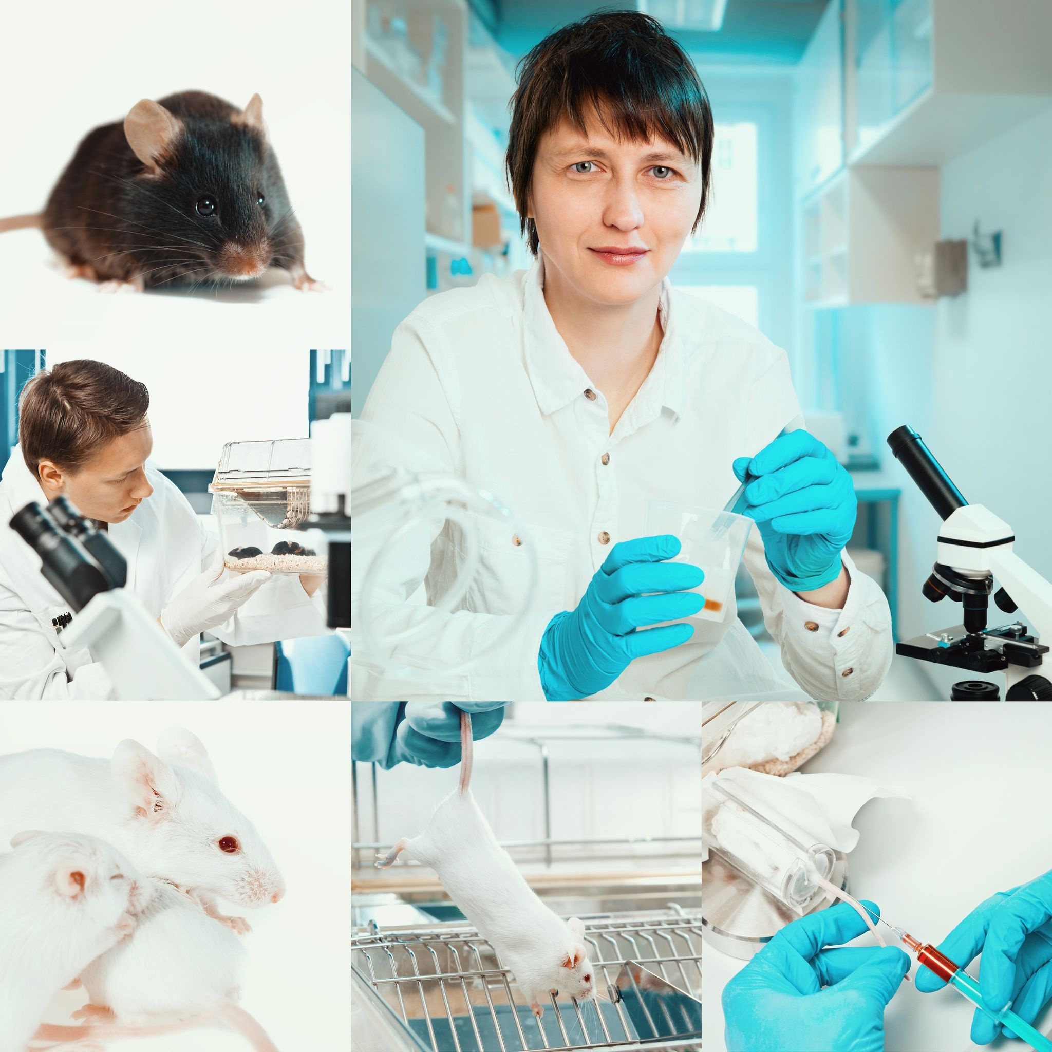Rats in Science-how the pest who endangers us can also save our