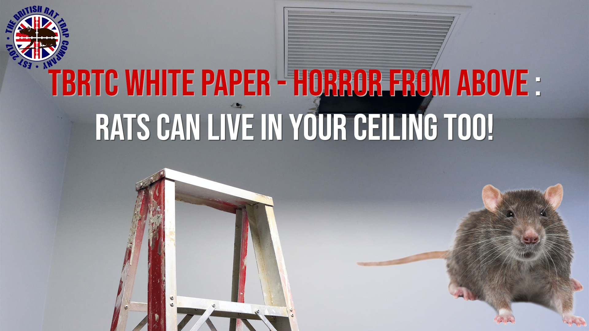 Horror from Above: Rats Can Live In Your Ceiling Too! – The